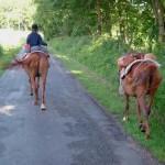 batage selle equitation hugues petel