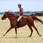 selle equitation hugues petel